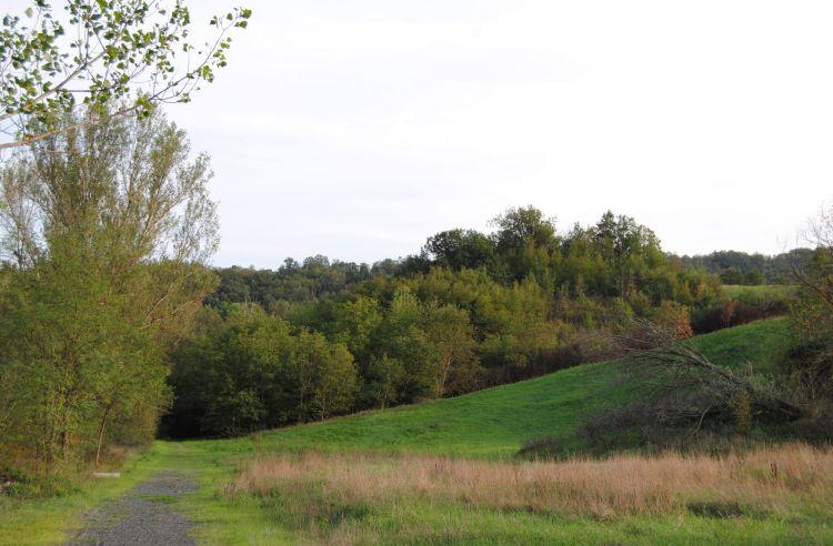 Vista di un bosco misto ceduo che caratterizza le zone collinari nei pressi di Fornovo