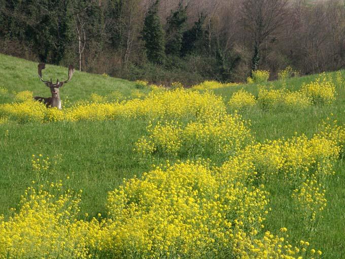 Lesignano de bagni u patriarchi verdi itinerari in valle umbra